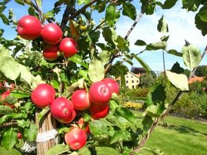 epler-i-tre